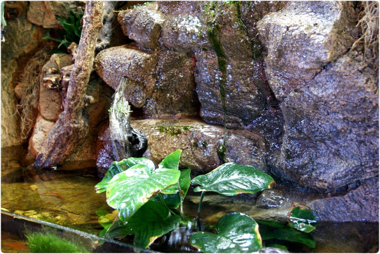 Waterfall in the terrarium