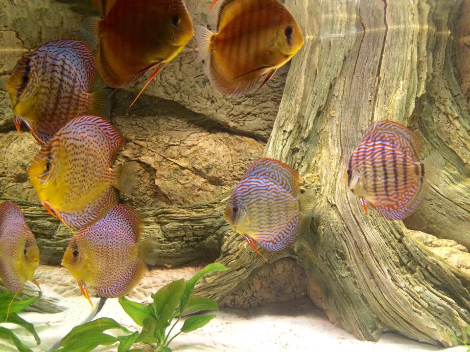 The flock of magical discus
